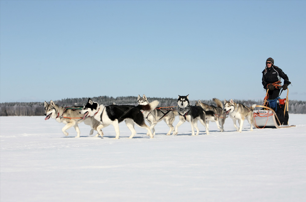 In the Wilderness with Huskies